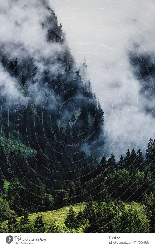 morgennebel im allgäu Natur Ferien & Urlaub & Reisen Sommer grün Landschaft weiß Baum Wolken Ferne Berge u. Gebirge Umwelt Gras Tourismus Freiheit Ausflug