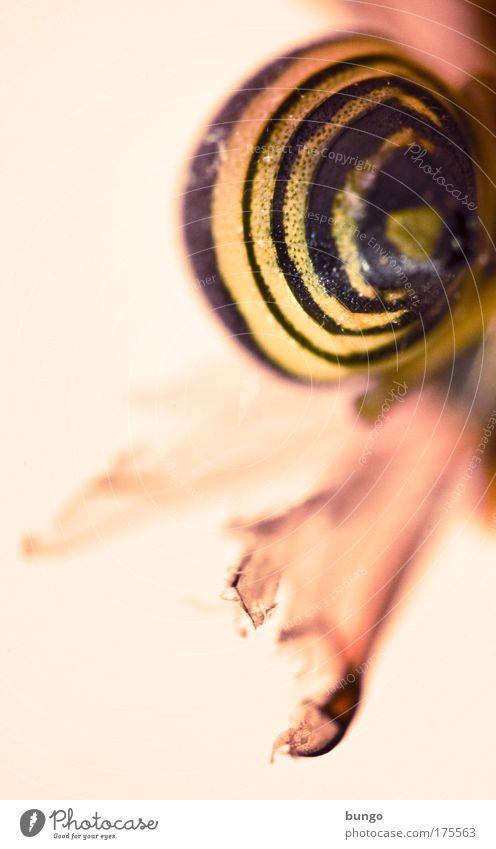 infinita vespa Farbfoto Makroaufnahme abstrakt Muster Textfreiraum links Kunstlicht Schwache Tiefenschärfe Tier Totes Tier Wespen Gliederfüßer Insekt 1 gelb rot
