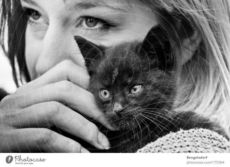 Findelkind Wohlgefühl Zufriedenheit Mensch feminin Junge Frau Jugendliche Auge 1 Katze Schnurrhaar schwarz Tier Vertrauen Geborgenheit Warmherzigkeit Sympathie