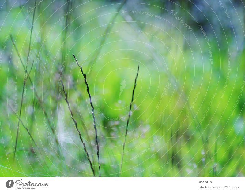 Wildwuchs Natur Pflanze Sommer ruhig Erholung Umwelt Gras Frühling natürlich Sträucher Idylle entdecken Leichtigkeit Umweltschutz Arbeit & Erwerbstätigkeit