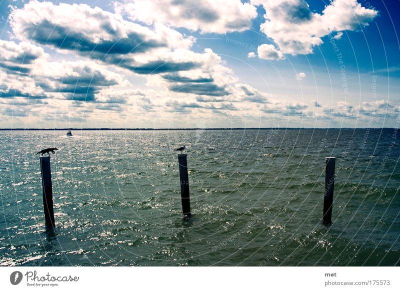 Alle guten Dinge sind drei Farbfoto Außenaufnahme Tag Starke Tiefenschärfe Weitwinkel Ferien & Urlaub & Reisen Sommer Sonne Meer Wellen Natur Luft Wasser Himmel