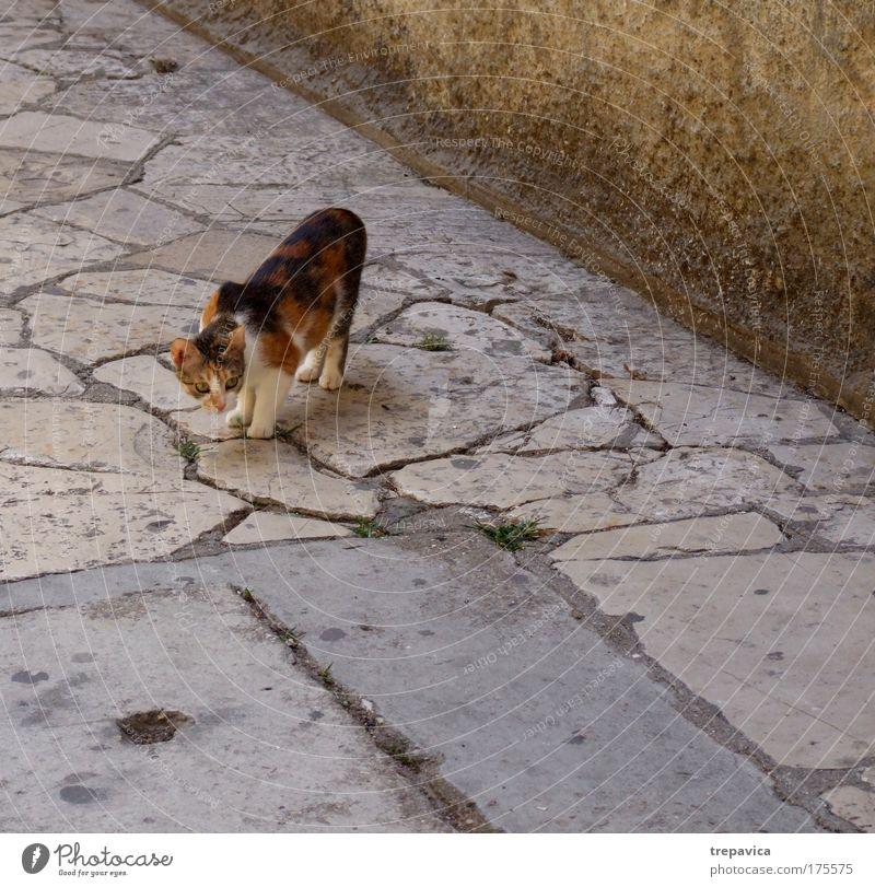 katze Farbfoto Außenaufnahme Menschenleer Tierporträt Altstadt Haustier Katze 1 Gefühle Stimmung Tierliebe Angst einzigartig Neugier Tourismus freilebend