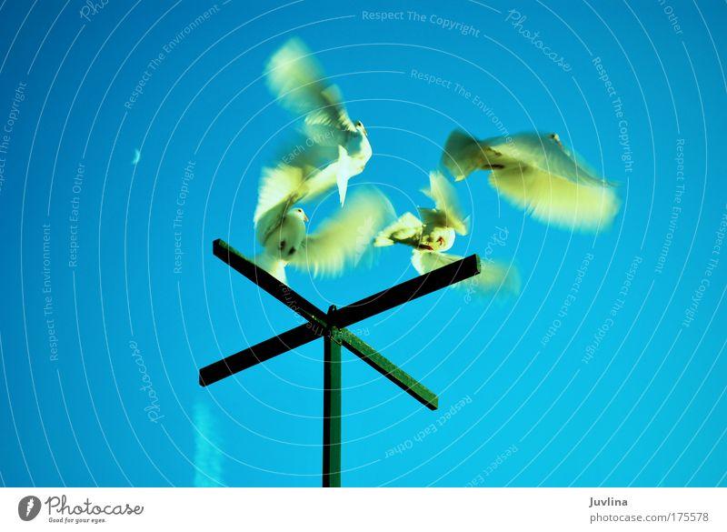 Tauben im Flug Farbfoto Außenaufnahme Tag Licht Bewegungsunschärfe Totale Tierporträt Freizeit & Hobby Umwelt Natur Luft Himmel Wolkenloser Himmel Sonnenlicht