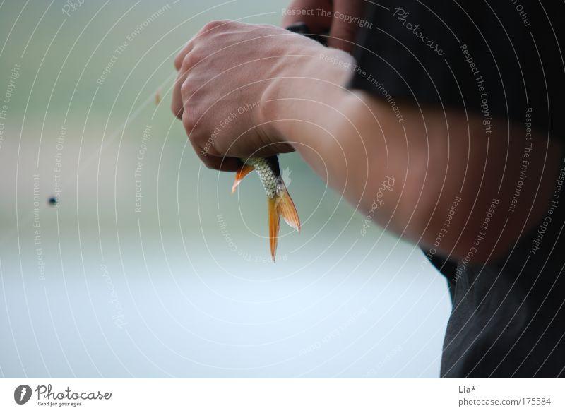 Köderfisch Fisch Angeln Mensch Tier 1 festhalten Angler Angelschnur Flosse Haken ködern gefangen See Wasser Petri Heil Farbfoto Außenaufnahme Textfreiraum links