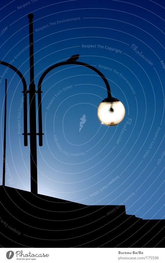 Natürliche Lichtquelle weiß Stadt blau schwarz Park Vogel Warmherzigkeit Schönes Wetter Sehenswürdigkeit Helsinki