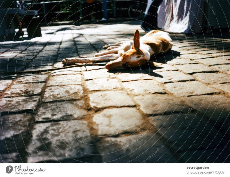 dog days. Stadt ruhig Straße dunkel Erholung Glück Hund Stein Zufriedenheit braun Erde schlafen Platz liegen dünn Spitze
