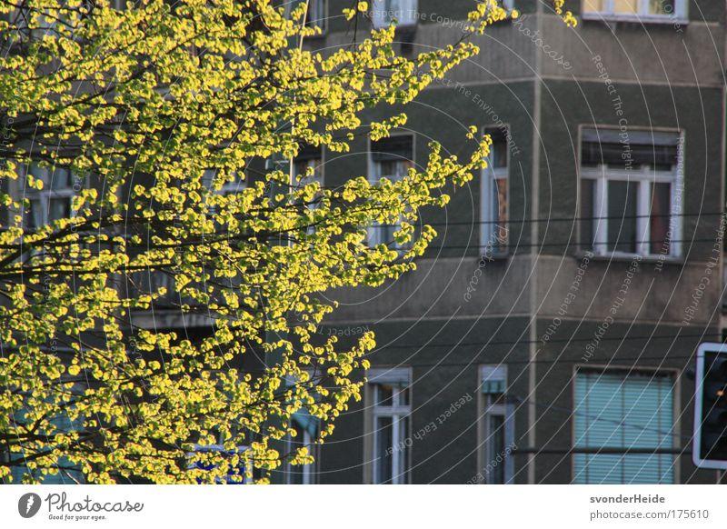 Berlin im Frühling - Prenzlauer Berg schön Baum grün Stadt Haus grau Gebäude Schönes Wetter