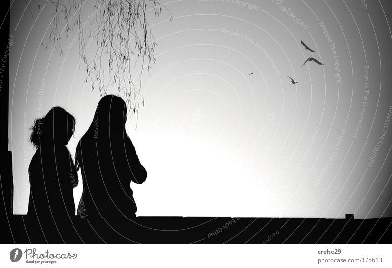 Leinwand Frau Mensch Himmel Natur Pflanze Sommer Tier Erwachsene feminin Leben Haare & Frisuren Denken Freundschaft Familie & Verwandtschaft Horizont Vogel