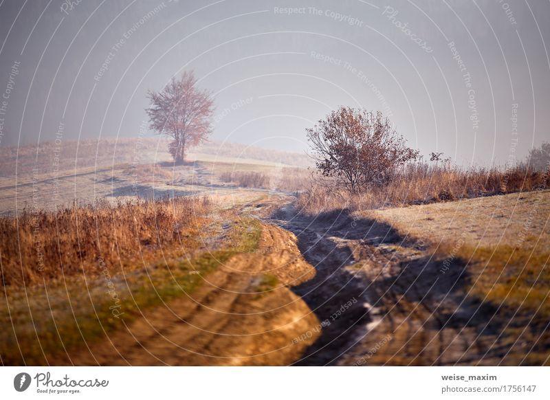 Nebelhafter sonniger Morgen Novembers in den Bergen Ferien & Urlaub & Reisen Tourismus Ausflug Abenteuer Ferne Freiheit Berge u. Gebirge wandern Umwelt Natur
