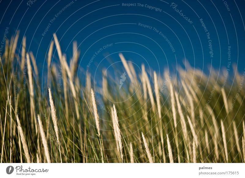 meeresgrün Farbfoto Gedeckte Farben Außenaufnahme Nahaufnahme Detailaufnahme Menschenleer Tag Sonnenlicht Unschärfe Schwache Tiefenschärfe Leben harmonisch