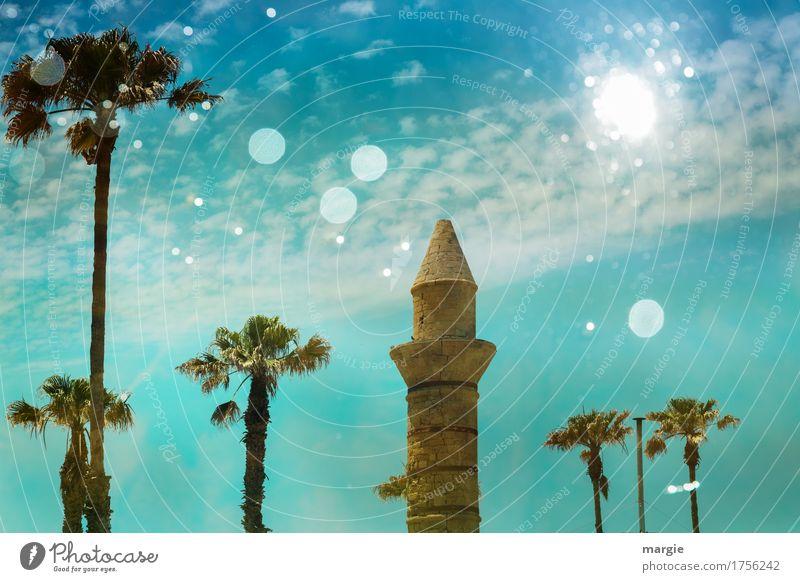 Antike Moschee Ferien & Urlaub & Reisen Tourismus Ausflug Abenteuer Ferne Sightseeing Sommer Sommerurlaub Sonne Kunst Kultur Baum Grünpflanze Nutzpflanze