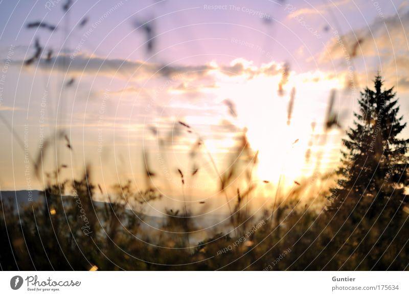 Geblendet... Natur Himmel weiß Baum Sonne grün Pflanze rot Sommer schwarz Wolken gelb Wald Erholung Wiese Gefühle