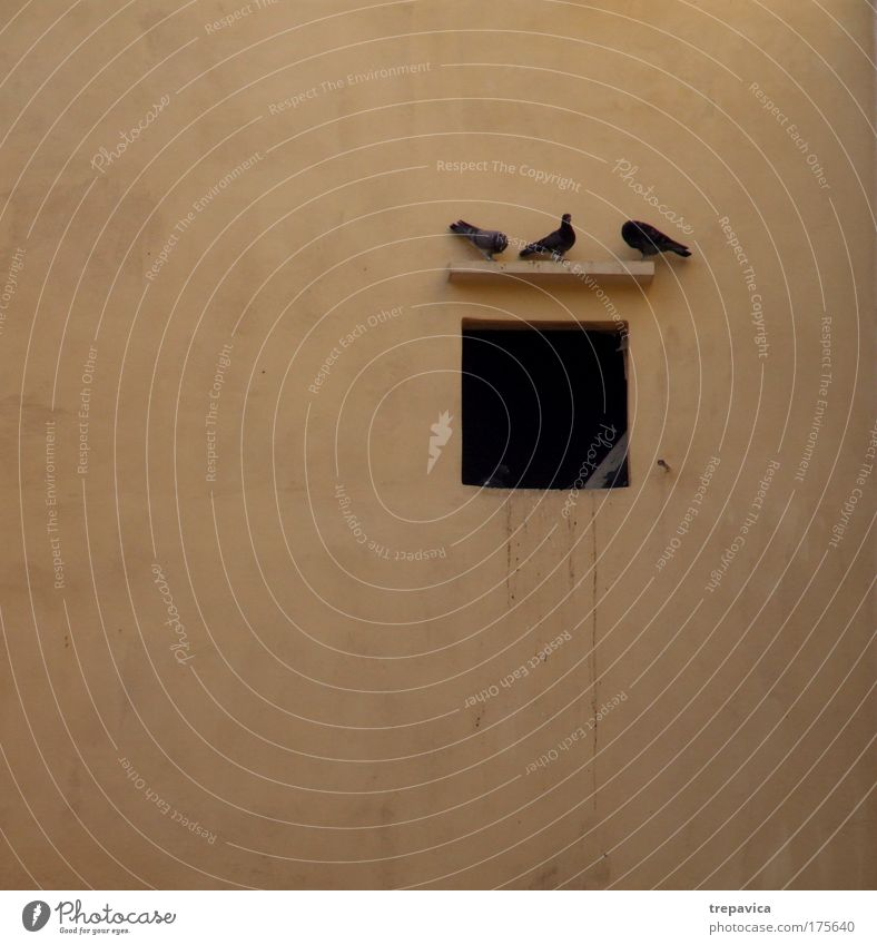 drei alt ruhig schwarz Tier gelb Leben Fenster Wand Umwelt Gebäude Mauer Traurigkeit Freundschaft braun Vogel Pause