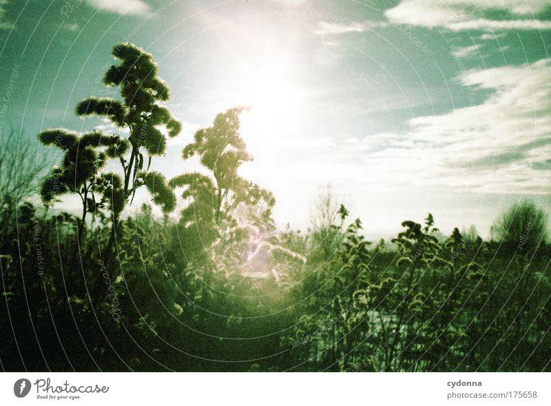 Lights Himmel Natur grün schön Pflanze Farbe Erholung Wiese Leben Umwelt Landschaft Gefühle Freiheit Traurigkeit träumen Stimmung