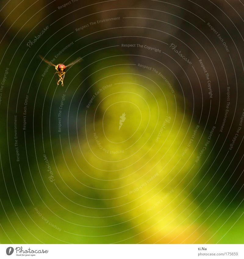 Ballerina im Flug Farbfoto Außenaufnahme Luftaufnahme Menschenleer Textfreiraum rechts Textfreiraum unten Umwelt Natur Landschaft Pflanze Frühling Sommer