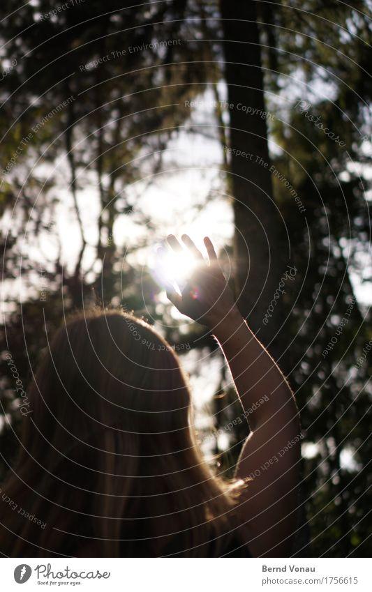Oberlicht Mensch feminin Hand 1 30-45 Jahre Erwachsene Gefühle Stimmung Glaube blenden Wald Natur Spaziergang Himmel grell hell zudecken Haare & Frisuren Rücken