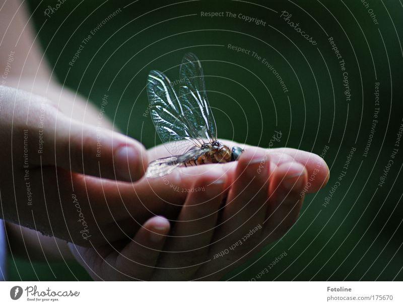 Leb wohl! Mensch Natur alt Hand Tier Umwelt Park Finger Flügel berühren Libelle Libellenflügel