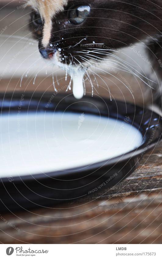 Jeder Tropfen zählt! Farbfoto Außenaufnahme Detailaufnahme Textfreiraum unten Tierporträt Wegsehen Haustier Katze Fell 1 Tierjunges trinken Flüssigkeit schwarz