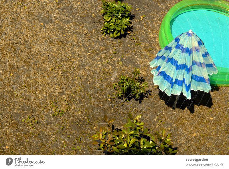 sonnenbaden. blau Wasser grün Ferien & Urlaub & Reisen Sommer Freude Erholung Gras Garten Freizeit & Hobby nass Ordnung Tourismus Sträucher Streifen Schwimmbad
