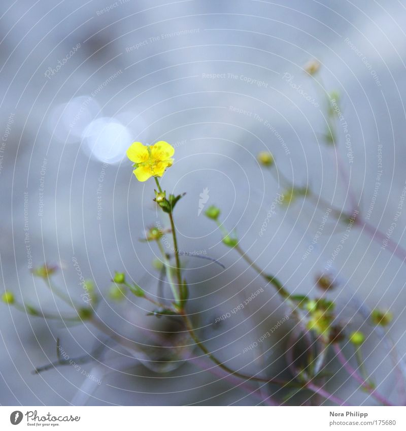 kleines blümchen Natur schön Blume blau Pflanze Sommer ruhig gelb Farbe Blüte Frühling Glück träumen Umwelt ästhetisch zart