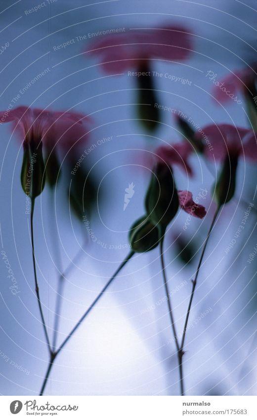 Blumenmonochrom Natur schön Pflanze Tier Leben Blüte Stimmung Park Kunst Klima frisch Fröhlichkeit Wachstum Häusliches Leben Romantik