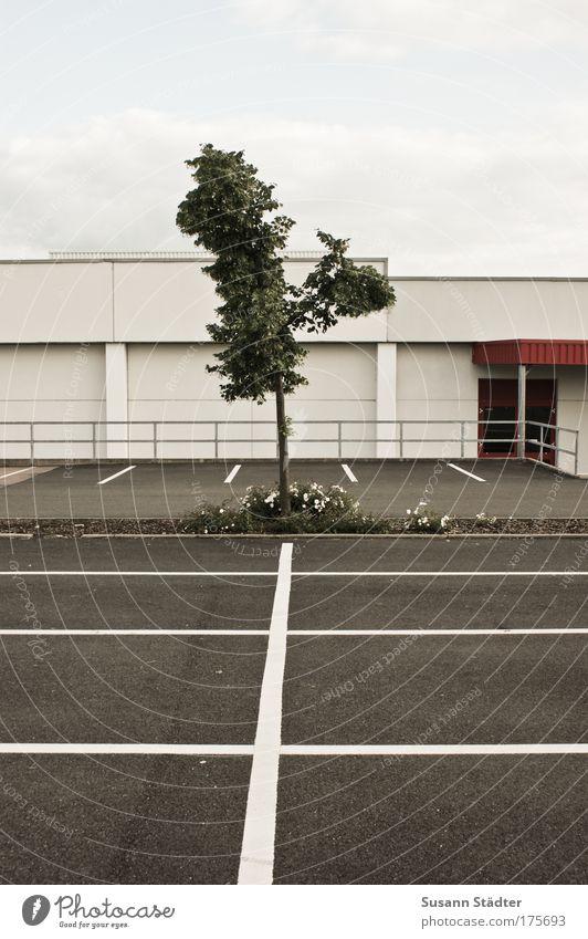 der letze Widerstand Baum grün ruhig Haus Einsamkeit kalt Wiese Lebensmittel Design trist fahren einfach Asphalt Geländer Parkplatz parken