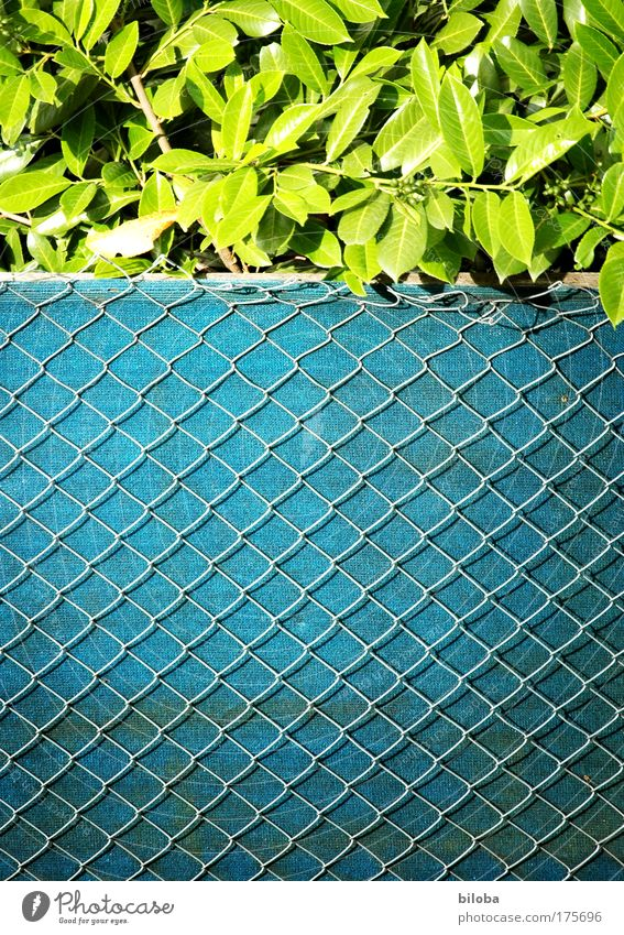 Zaun-Zeug grün Pflanze Sommer Einsamkeit Garten Umwelt authentisch Dorf außergewöhnlich Klischee Einfamilienhaus Maschendrahtzaun