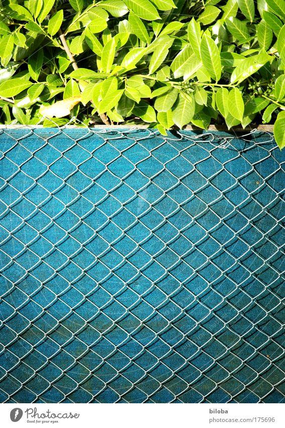 Zaun-Zeug grün Pflanze Sommer Einsamkeit Garten Umwelt authentisch Dorf außergewöhnlich Zaun Klischee Einfamilienhaus Maschendrahtzaun