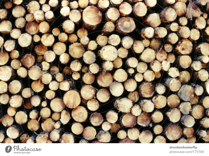 Pinienholz Natur Holz Industrie Feuer Baumstamm Baumrinde Stapel Harz Säge