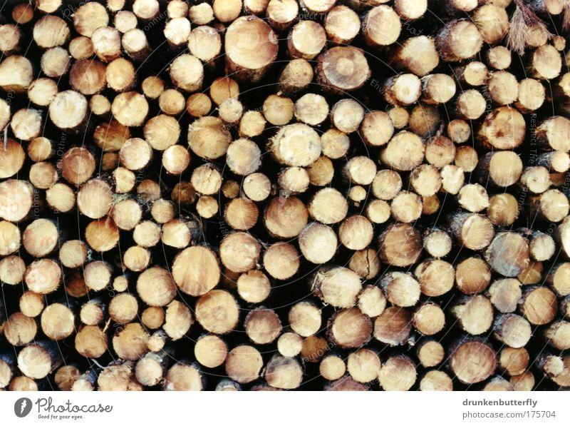 Pinienholz Natur Holz Industrie Feuer Baumstamm Baumrinde Stapel Harz Pinie Säge
