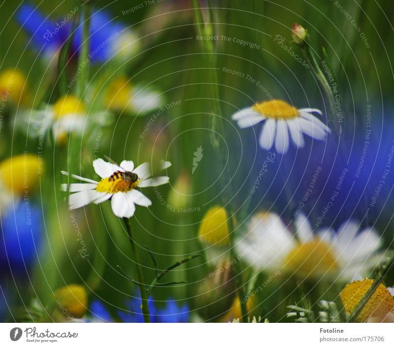 beim naschen erwischt Farbfoto mehrfarbig Außenaufnahme Tag Sonnenlicht Umwelt Natur Landschaft Pflanze Tier Sommer Schönes Wetter Blume Gras Blüte Wildpflanze