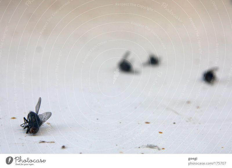 R.I.P. Tier Tod dreckig klein Fliege kaputt Ende Vergänglichkeit trocken Ekel Insekt vergiften dehydrieren vergiftet Schädlingsbekämpfung Totes Tier