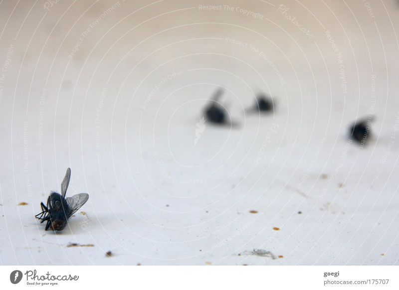 R.I.P. Fliege 4 Tier dehydrieren dreckig Ekel kaputt klein trocken Tod Ende Vergänglichkeit Farbfoto Innenaufnahme Nahaufnahme Tag Schwache Tiefenschärfe