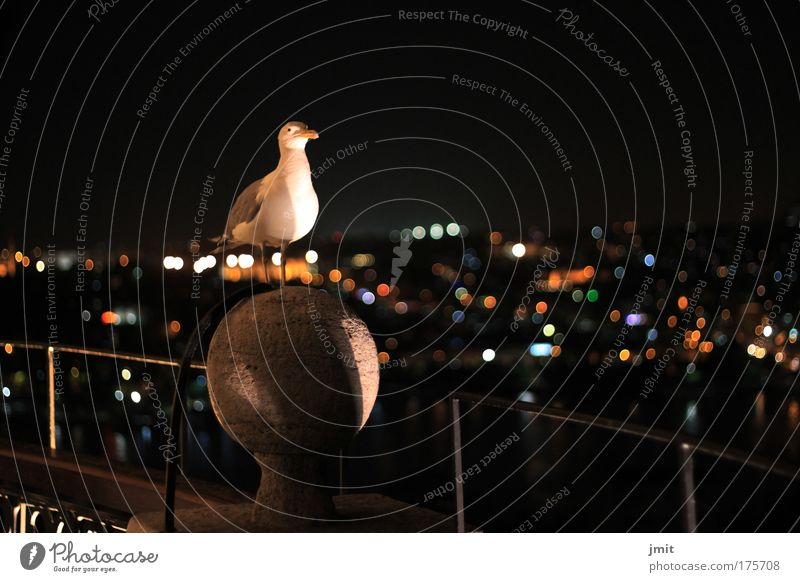 Vogel Tier beobachten Neugier Wildtier