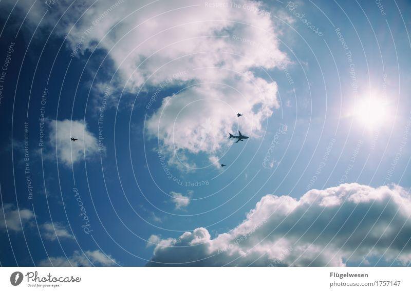 Flugschule Umwelt Natur Himmel nur Himmel Wolkenloser Himmel Klima Klimawandel Wetter Luftverkehr Flugzeug Passagierflugzeug Propellerflugzeug Doppeldecker