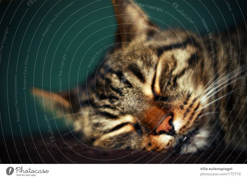 katerstimmung grün ruhig Tier Erholung träumen Katze schlafen Tiergesicht liegen niedlich Haustier Hauskatze friedlich Schlafplatz
