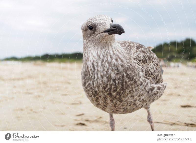 Was willst'n?!! Ferien & Urlaub & Reisen Meer Tier Strand Tierjunges Auge Vogel Wildtier Feder Flügel beobachten Neugier Ostsee Wachsamkeit Appetit & Hunger