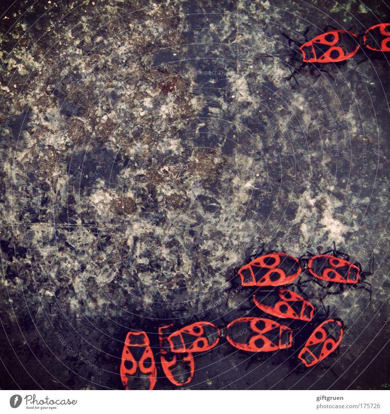 das große krabbeln Natur rot Tier Umwelt Wege & Pfade grau klein Stein sitzen mehrere Tiergruppe Lebewesen Sonnenbad chaotisch durcheinander