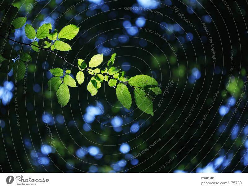 Im Dunkelwald Natur grün blau Baum Sommer Blatt ruhig schwarz Wald Erholung dunkel Umwelt Frühling natürlich Hoffnung Ast