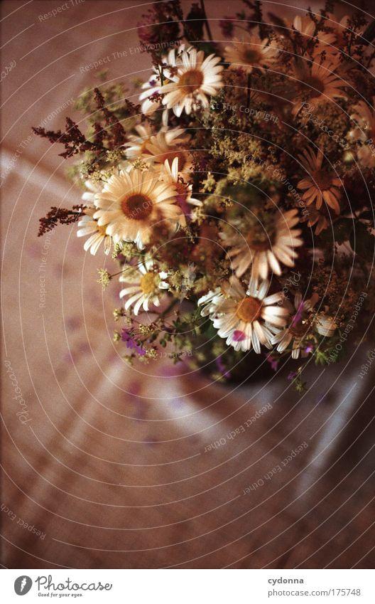Blumenstrauß Natur Pflanze schön Sommer Blume Freude Leben Traurigkeit Gefühle Frühling Feste & Feiern träumen Geburtstag ästhetisch Kommunizieren Idee