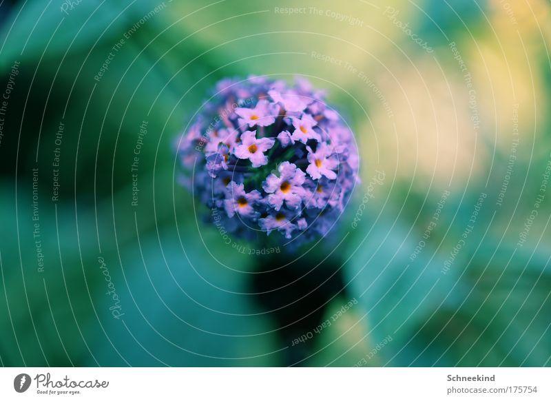 Blütezeit Natur schön Blume grün Pflanze Sommer ruhig Tier Wiese Landschaft Umwelt ästhetisch violett Kitsch
