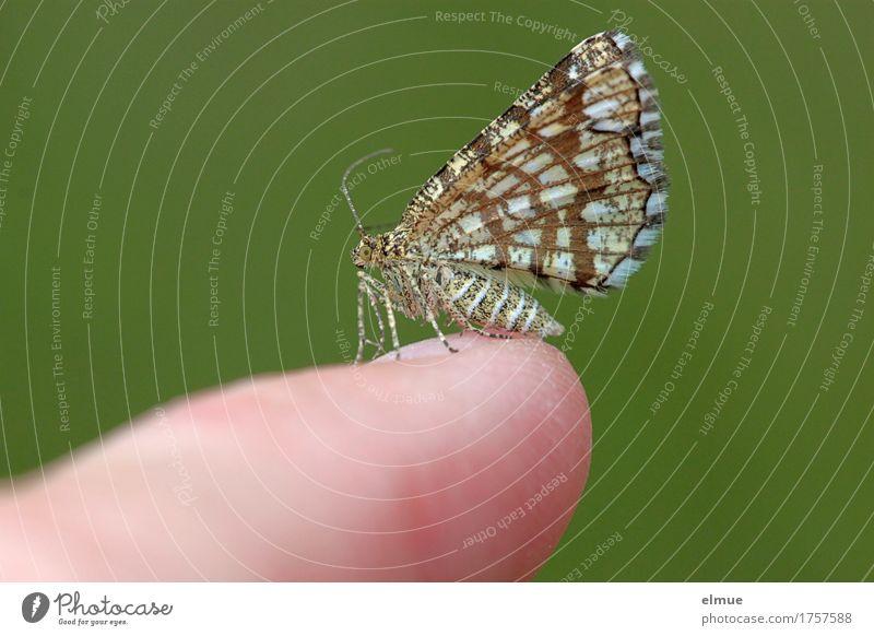 small talk Natur Umwelt klein Glück Freiheit Design träumen elegant Wildtier Kommunizieren stehen Finger beobachten berühren Neugier zart