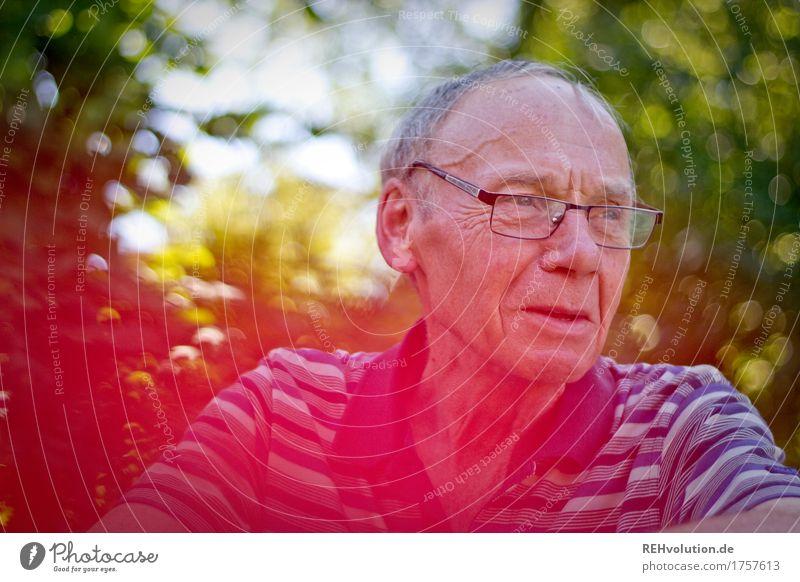 senior im garten Mensch maskulin Mann Erwachsene Männlicher Senior Großvater Gesicht 1 60 und älter Umwelt Natur Sträucher Brille grauhaarig beobachten alt
