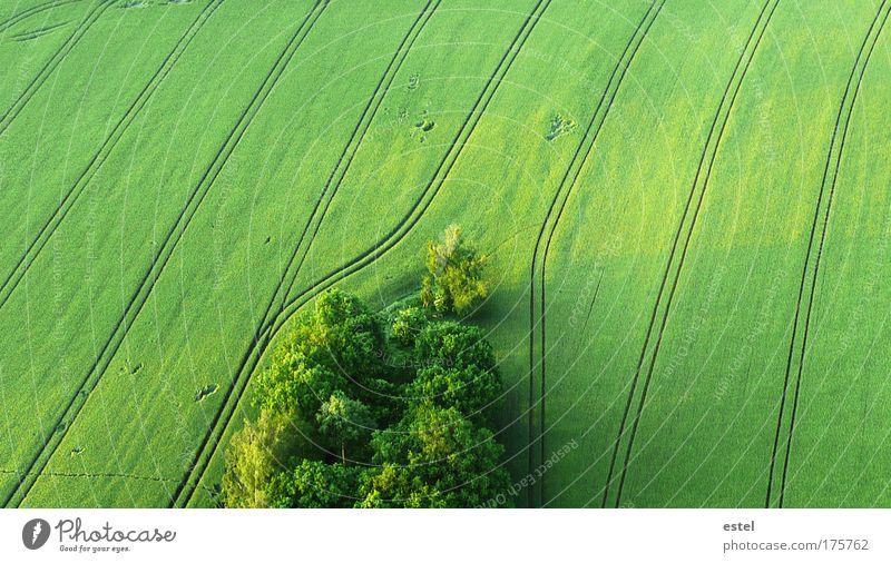 Es grünt so grün Natur ruhig Wald Wiese Frühling Ordnung Landschaft Stimmung Feld Umwelt fliegen frei Erde Perspektive natürlich