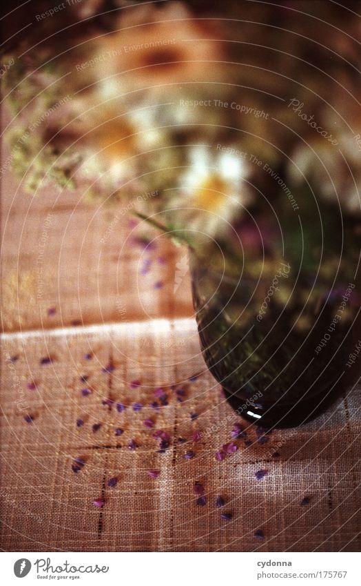 Vergänglichkeit Natur schön Blume Pflanze ruhig Leben Gefühle Tod Traurigkeit Feste & Feiern Geburtstag Umwelt Zeit Wandel & Veränderung einzigartig
