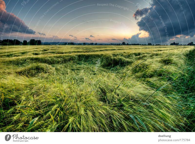 Vor dem Sturm IV Himmel Natur blau grün Pflanze Sommer rot Landschaft Wolken gelb Umwelt Gras Horizont Wetter Feld gold