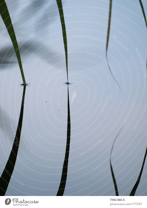 Zusammen eintauchen blau Wasser Pflanze Tier Einsamkeit Umwelt Landschaft Gras grau See wild Kreis Streifen Spitze Idylle berühren