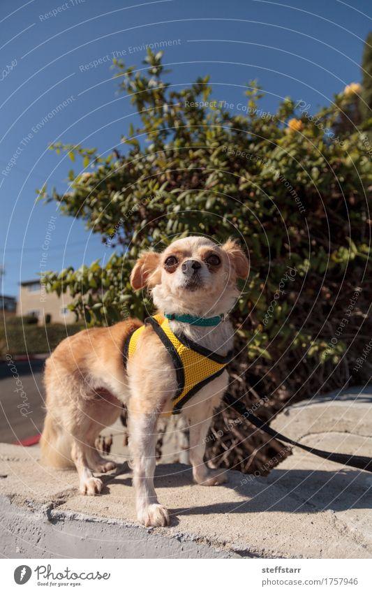 Hund Tier gelb braun gold Haustier Tiergesicht