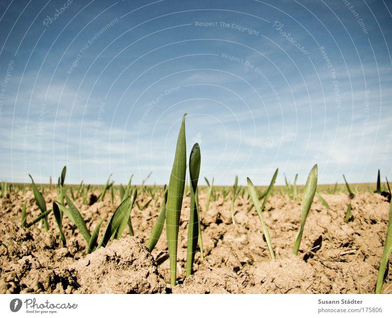 erWACHSEN Himmel Pflanze Sommer Tier Wiese Gras Sand hell Erde Feld Wachstum neu Schönes Wetter Neugier heiß kämpfen
