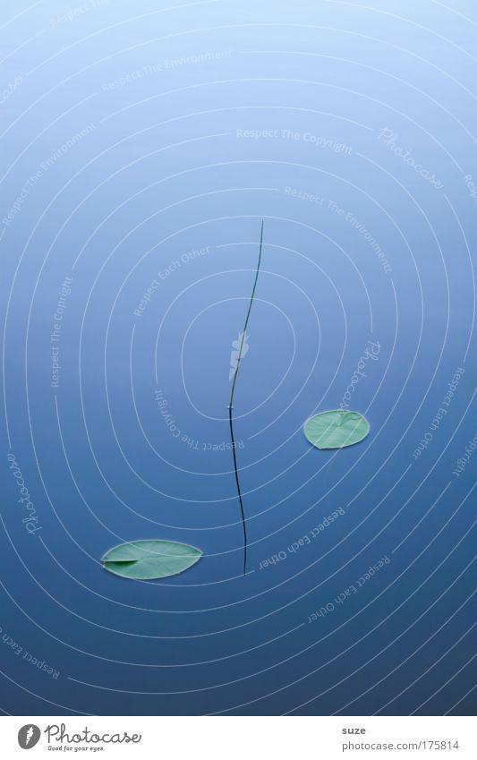 Stilles Wasser Natur blau Wasser Pflanze ruhig Erholung Umwelt kalt Leben Gras See träumen Kunst Zufriedenheit Urelemente Buddhismus